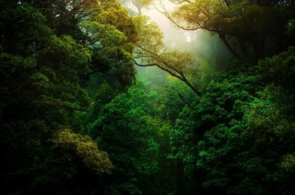 Les avantages pour l'environnement dans un monde sans argent?